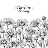 Disegno del confine del fiore della margherita Modello senza cuciture floreale inciso disegnato a mano di vettore Il nero della c Fotografia Stock