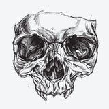 Disegno del cranio illustrazione di stock
