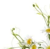 Disegno del fiore Fotografia Stock