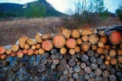 Disegno del fronte di smiley degli alberi concetto felice, sopra Fotografia Stock