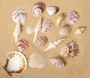 Disegno dell'accumulazione del Seashell Fotografia Stock Libera da Diritti