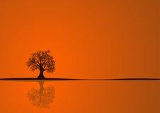 Disegno dell'albero di autunno Fotografia Stock Libera da Diritti