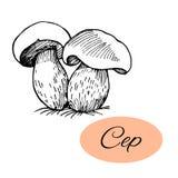 Disegno dell'inchiostro del porcino Fotografie Stock