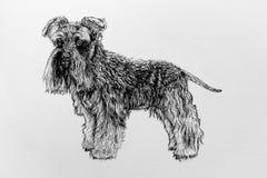Disegno dell'inchiostro di un cane dello schnauzer Fotografia Stock Libera da Diritti