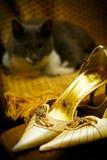 Disegno dell'invito di cerimonia nuziale con gli alti talloni ed il gatto Fotografie Stock
