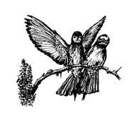 Disegno della coppia i pappagalli selvaggi che si siedono su un ramo, illustrazione disegnata a mano illustrazione di stock