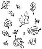 Disegno della foglia di autunno Immagine Stock