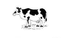 Disegno della mucca Fotografia Stock