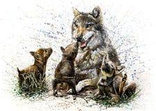 Disegno della pittura dell'acquerello della famiglia del lupo Fotografia Stock Libera da Diritti