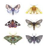 Disegno delle farfalle irsute, un insieme delle farfalle, Dipper rossastro, orso giallo, occhio Artemis, belle ali dell'acquerell illustrazione di stock