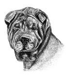 Disegno di carboncino e della matita di un cane di Sharpei Fotografia Stock Libera da Diritti