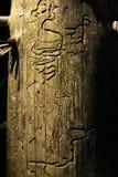 Disegno di legno del verme Fotografia Stock Libera da Diritti