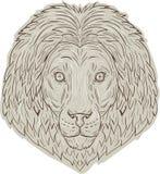 Disegno di Lion Big Cat Head Mane Fotografia Stock Libera da Diritti