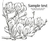 Disegno di scheda con la magnolia Fotografie Stock