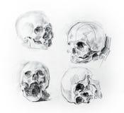 Disegno di studio di cranio Matita su documento Immagini Stock Libere da Diritti