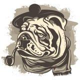 Disegno di un agente investigativo del bulldog, portando un cappuccio e una sciarpa Immagine Stock