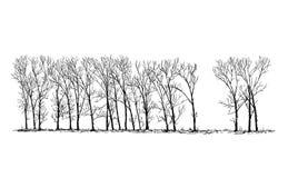 Disegno di vettore del fumetto del gruppo o vicolo degli alberi di pioppo in lontano Fotografie Stock Libere da Diritti