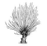 Disegno di vettore del fumetto del salice o dell'albero giallastro Immagine Stock Libera da Diritti