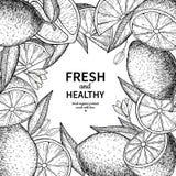 Disegno di vettore dell'etichetta del limone Modello inciso della struttura degli agrumi Immagini Stock Libere da Diritti