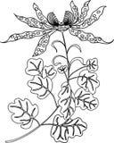 Disegno di vettore dell'orchidea decorativa fotografia stock libera da diritti