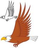 Disegno di volo dell'aquila Fotografia Stock