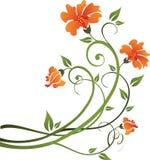 Disegno floreale Fotografia Stock Libera da Diritti