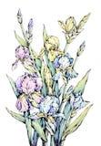 Disegno floreale dell'acquerello Fotografia Stock Libera da Diritti
