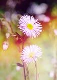 Disegno floreale di Border.Flower. immagini stock