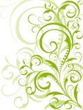 Disegno floreale verde su priorità bassa bianca Immagini Stock