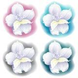 Disegno grafico del fiore dell'orchidea Royalty Illustrazione gratis