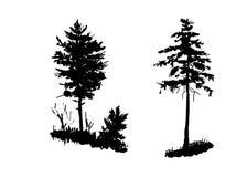 Disegno, insieme degli elementi degli isolati, giovane pino e giovane abete rosso nella foresta, illustrazione di vettore di schi fotografie stock libere da diritti
