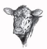 Disegno a matita della mucca Fotografia Stock