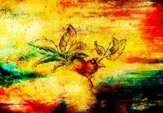 Disegno a matita su vecchia carta, Rosa Nome latino, canina di rosa E punti di colore su fondo Fotografia Stock