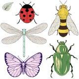 Disegno messo insetti Fotografia Stock