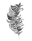 Disegno modellato della piuma Fotografia Stock