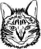 Disegno stilizzato di un bianco nero capo del ` s del gatto, per la maglietta, la copertura ed altra vettore di uso Fotografie Stock