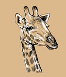 Schizzo del fronte di una giraffa Fotografia Stock Libera da Diritti