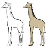 Disegno a tratteggio della giraffa Fotografia Stock