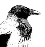 Disegno a tratteggio incappucciato dell'inchiostro della testa di profilo del corvo in bianco e nero illustrazione vettoriale
