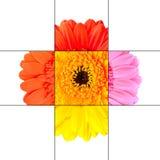 Disegno variopinto del mosaico del fiore del tagete della gerbera Immagini Stock Libere da Diritti