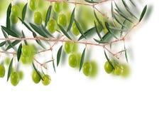 Disegno verde oliva del bordo. Fotografie Stock