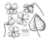 Disegno viola del fiore Insieme floreale inciso disegnato a mano di vettore vi Immagini Stock