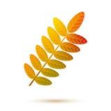Diseño colorido del otoño de la caída del logotipo del símbolo de la hoja del serbal Imagen de archivo
