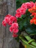 Diseño de la decoración del jardín. Flor de la flor Imágenes de archivo libres de regalías