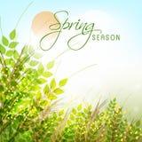 Diseño de la tarjeta de felicitación para la estación de primavera Fotos de archivo