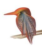 Diseño del martín pescador Foto de archivo