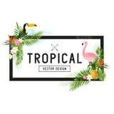 Diseño tropical de la frontera Fotos de archivo