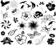 Diseños florales ilustrados Fotografía de archivo libre de regalías