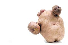 Disfigured potatoe Stock Photos