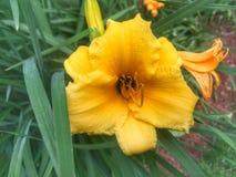 Disfrutar del verano y del it& x27; flores amarillas hermosas de s foto de archivo